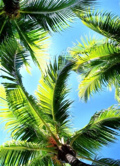 The meaning and symbolism of the word - «Palm»