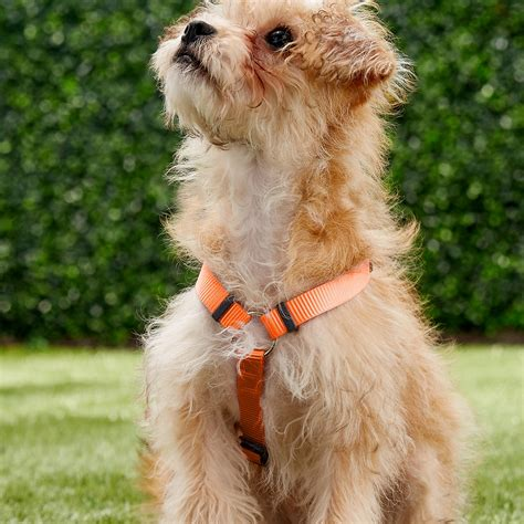 Red Dingo Classic Dog Harness, Orange, Small - Chewy