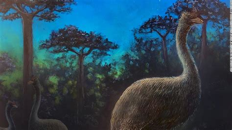 Elephant birds were blind, nocturnal and taller than Big