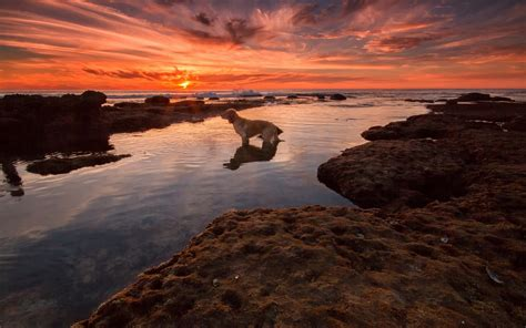 water animals dog sky clouds sunset Wallpapers HD